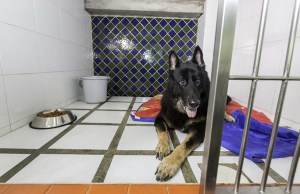 8 Tips on How to Pick a Good Dog Kennel If You're Going Away