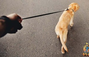 A Guide for Leash Training Your Dog
