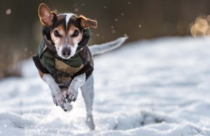 Best Dog Winter Coat Products