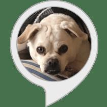 Dog Breed Quiz Alexa Skill