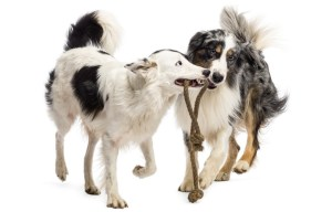 Tips on making dogs to get along and like each other