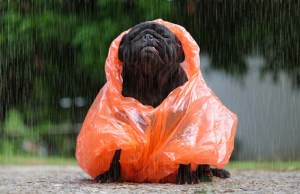 How to Keep Your Dog Warm and Dry