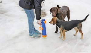 Nerf Dog Tennis Ball BlasterMost fun for owners