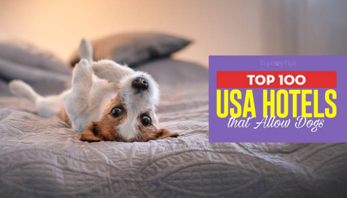 The 100 Best Hotels That Allow Dogs in the USA