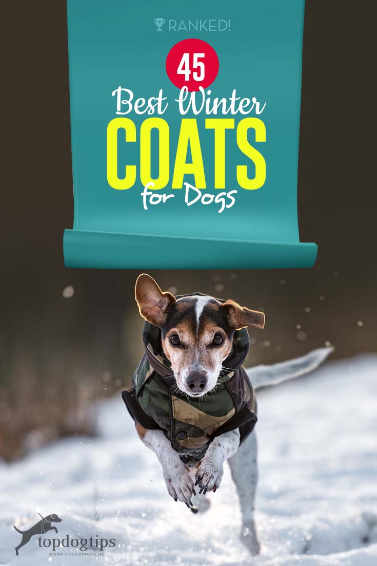 The 45 Best Dog Winter Coats to Keep Your Dogs Warm