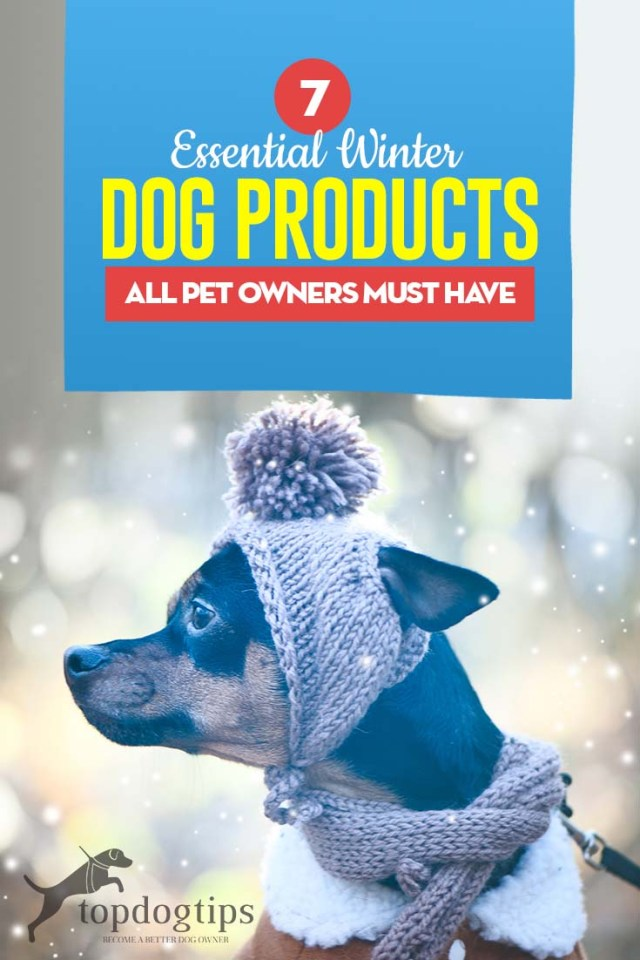 The 7 Essential Winter Dog Products to Start Shopping for Right Now