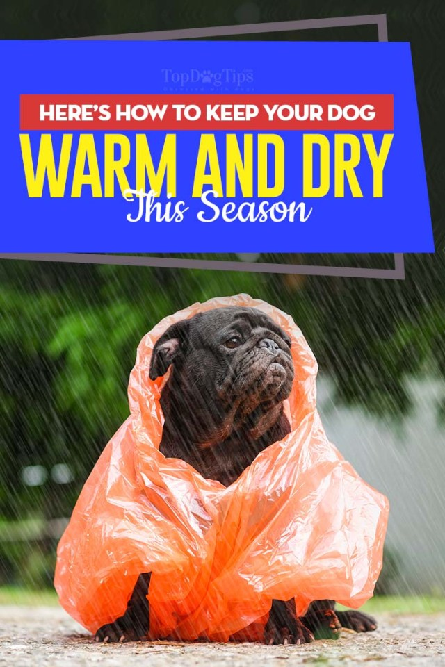 Tips on How to Keep Your Dog Warm and Dry This Season