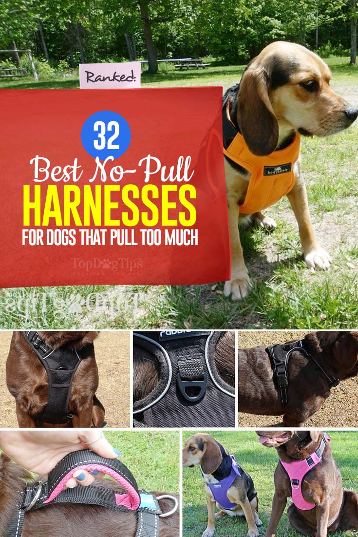 32 Best No Pull Harnesses for Dogs