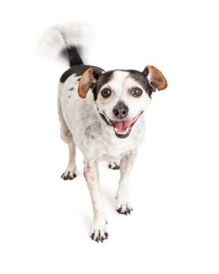 Treating Happy Tail Syndrome in Dogs