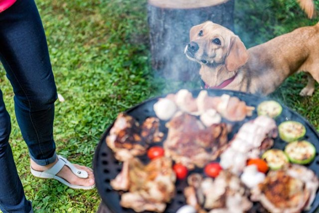 What Human Food Can Dogs Eat - Consider These Options