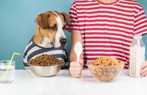 What Human Food Can Dogs Eat
