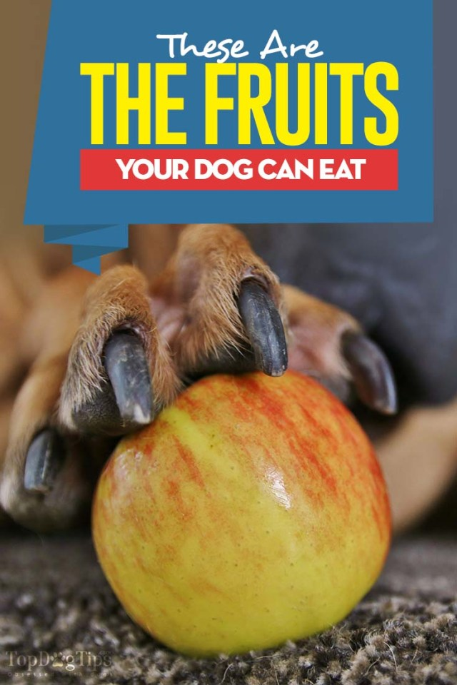 Your Guide to What Fruits Can Dogs Eat