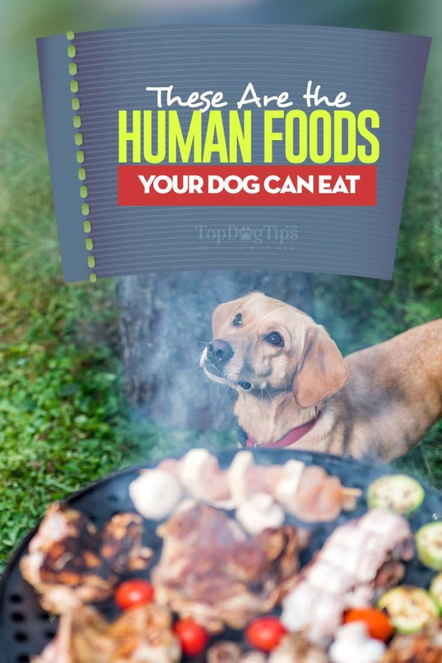 Your Guide to What Human Food Can Dogs Eat