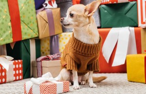 101 Unique Gifts for Dog Lovers for Any Occasion