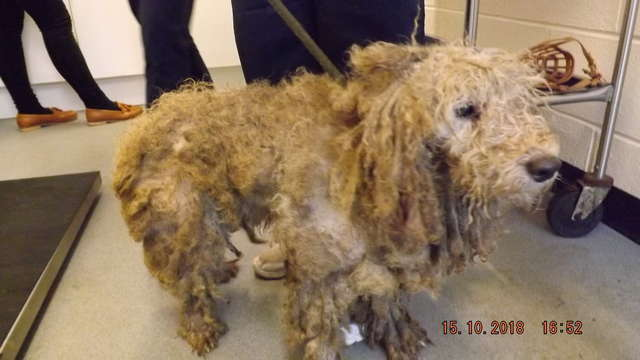15 Separately Abandoned Matted Dogs May Be Linked, Authorities Say