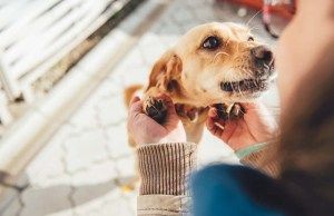 7 Ways to Tell Your Dog I Love You