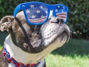 Top The 20 Most American Dog Breeds