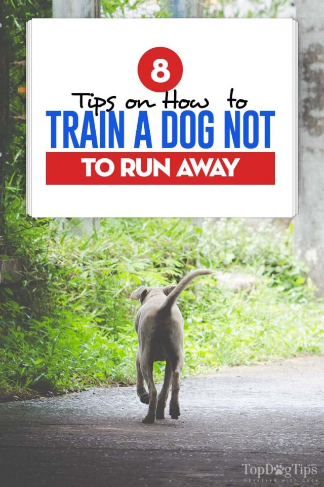 Guide on Training a Dog Not to Run Away