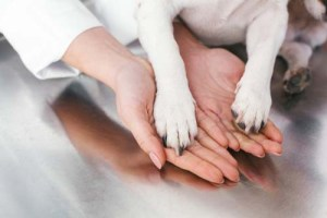More Involvement in the Veterinary Community