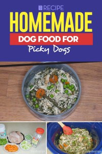 Recipe - Homemade Dog Food for Picky Dogs