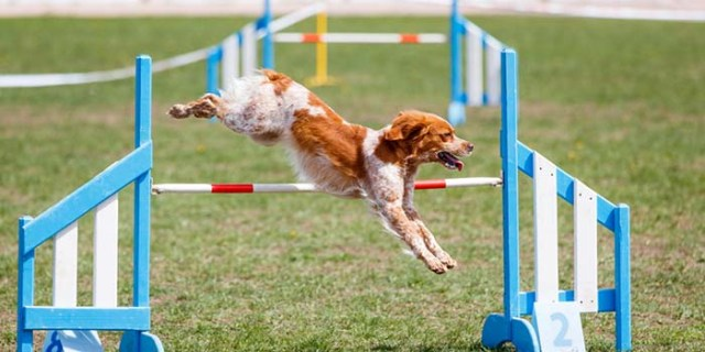 Sign Up for a Dog Sport