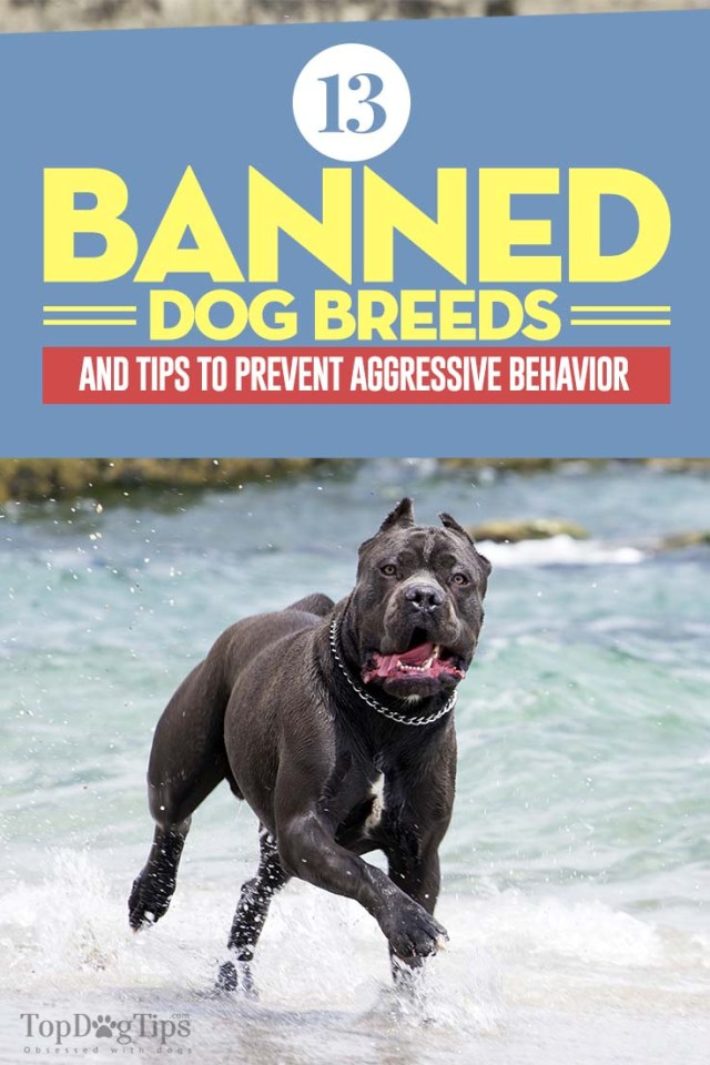The 13 Banned Dog Breeds