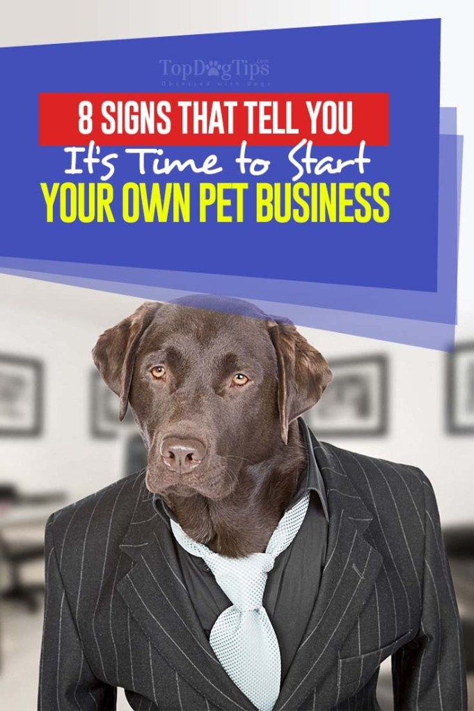 The 8 Signs That Tell You It's Time to Start Your Own Pet Business