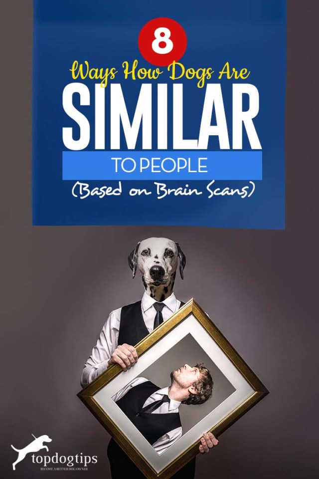 The 8 Ways How Dogs Are Similar to People (Based on Brain Scans)