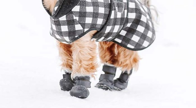 Dog Paw Protection for Winter