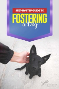 The Complete Step-by-step Guide to Fostering a Dog