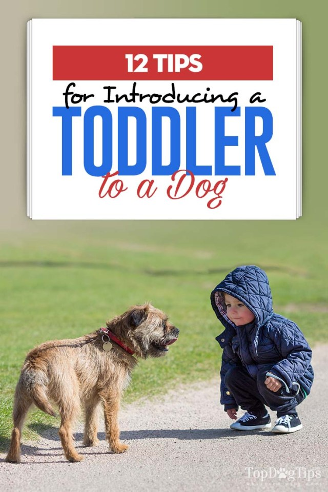 Top 12 Tips for Introducing a Toddler to a Dog