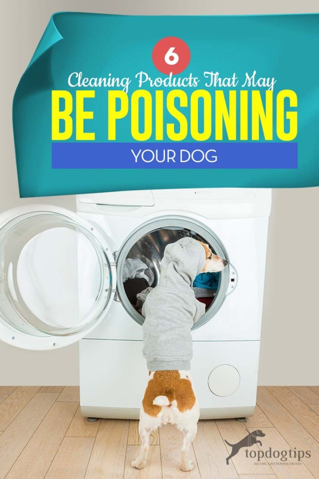 Top 6 Cleaning Products That May Be Poisoning Your Dog