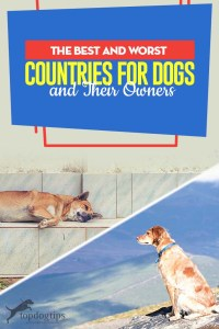 Top Best and Worst Countries for Dogs and Their Owners