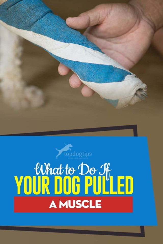 What to Do If Your Dog Pulled a Muscle - A Guide