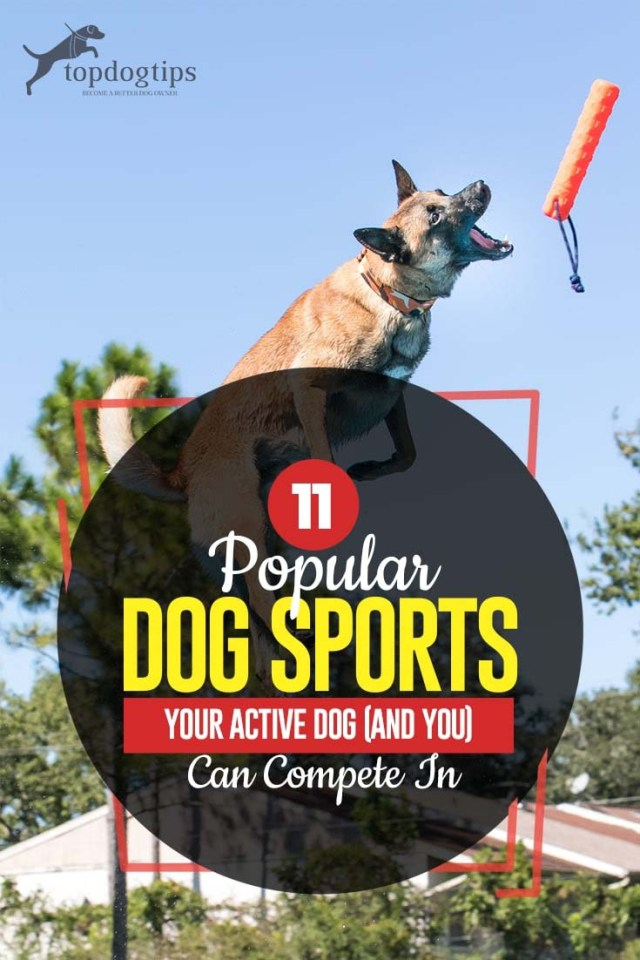 11 Most Popular Dog Sports