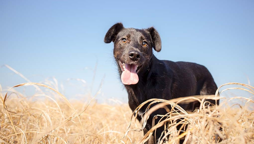 15 Breeds with Least Health Problems