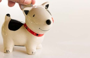 4 Best Savings Accounts for Pet Owners
