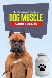A Pet Owner's Guide to Dog Muscle Supplements