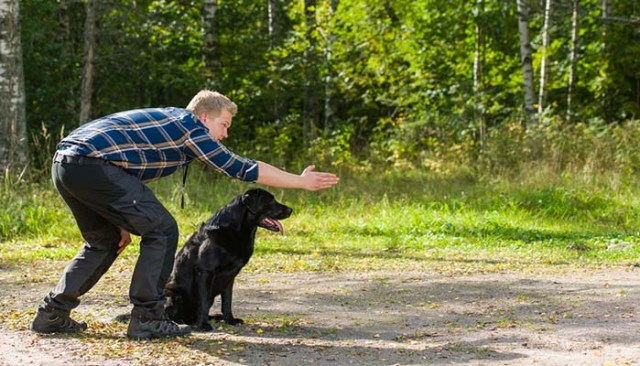 Controlled freedoms in hunting dog training