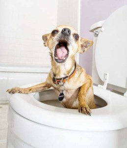 Do You Need an Indoor Dog Toilet