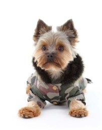 Does Your Dog Need Winter Clothes