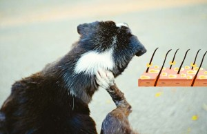 Dog Dandruff - 6 Different Causes, Prevention and Treatment