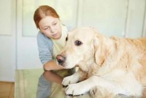 Fear of Children in Dogs