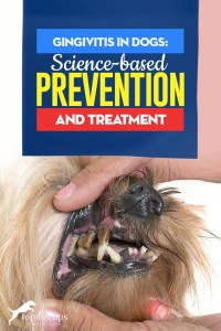 Gingivitis in Dogs Tips - Science-based Prevention and Treatment