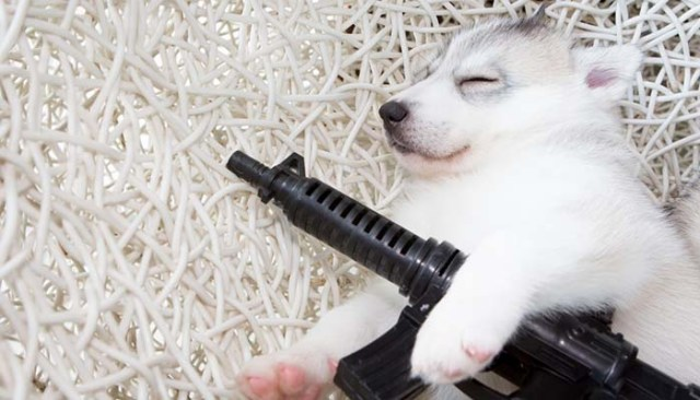 Gun training a dog