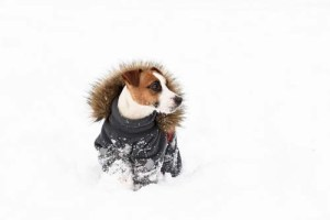 How Effective Winter Coats for Dogs Actually Are