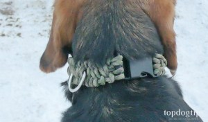 You will need about 2' for paracord for every inch of the DIY dog collar.