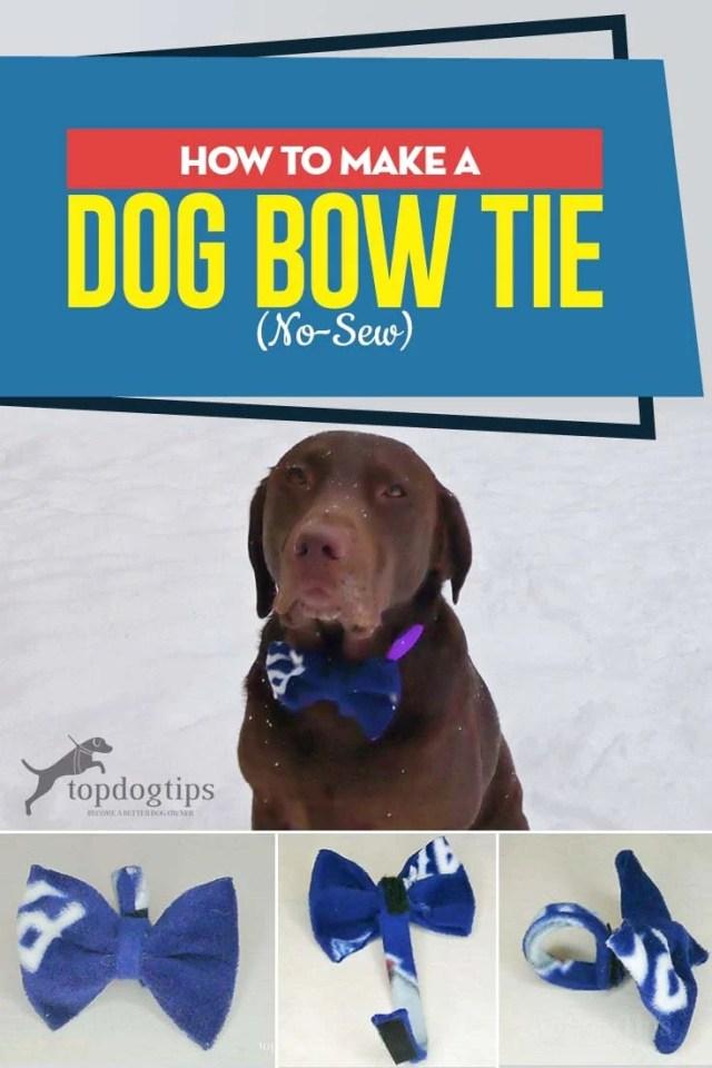 How to Make a Dog Bow Tie (No-Sew DIY Guide)