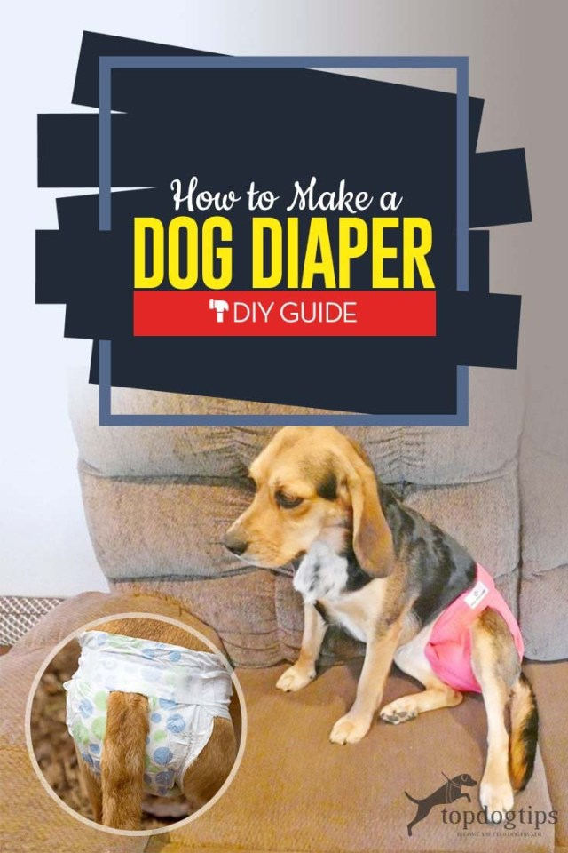 How to Make a Dog Diaper the Cheap and Easy Way