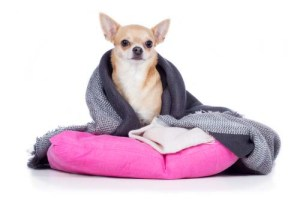 How to Treat a Dog's Cold